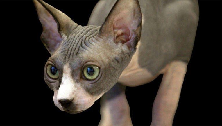 7bb3ff5e-cat-whiskers_1443026165387-402970.jpg