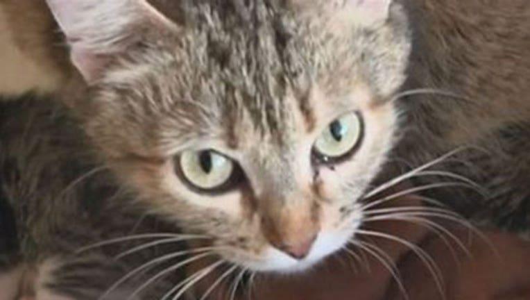 64d746c8-Cat, FILE-402970