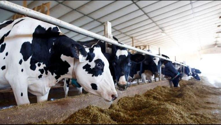 dfff2543-cows getty_1549986138973.JPG-405538.jpg