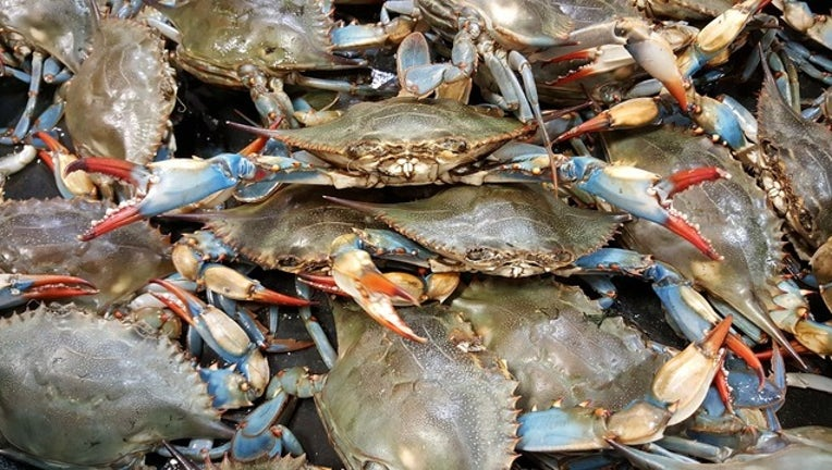 MARYLAND BLUE CRABS-401720