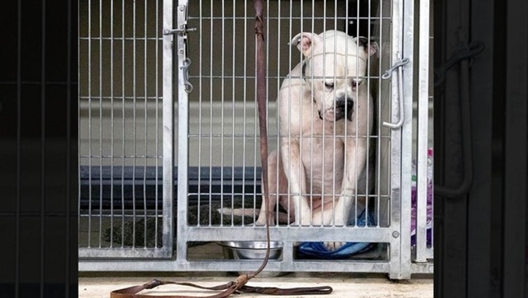 b2886b10-dog at shelter for web_1561550524179.png.jpg