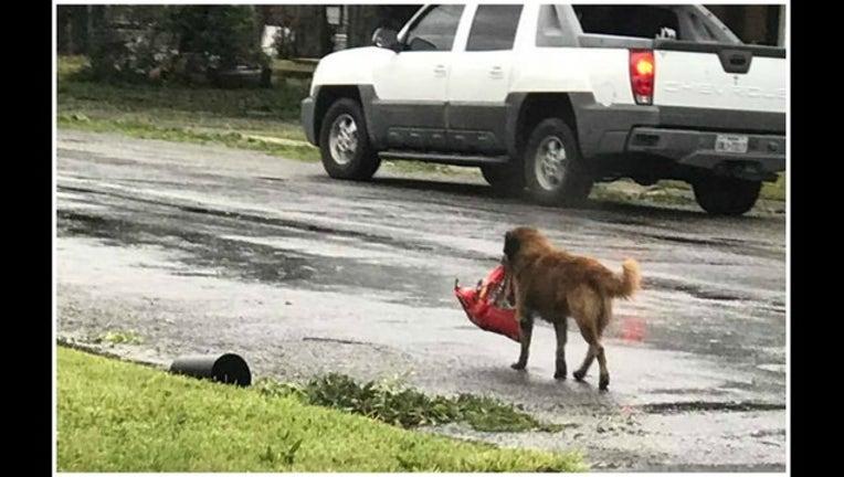 bc938e24-dog carry texas_1503950085818-405538.jpg