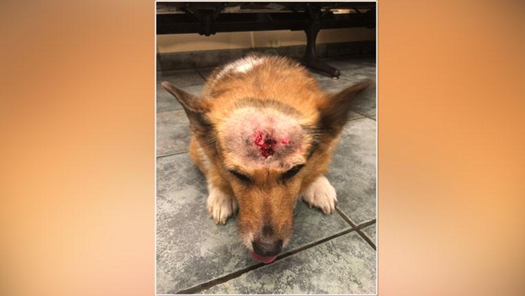 59a1fd04-dog injury a_1544222540381.jpg-401385.jpg