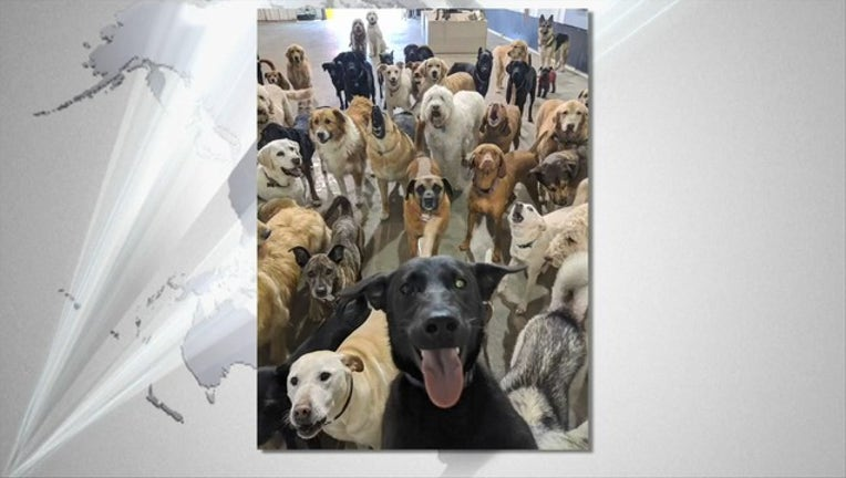 b8066885-dog selfie 1_1526159777914.PNG-405538.jpg