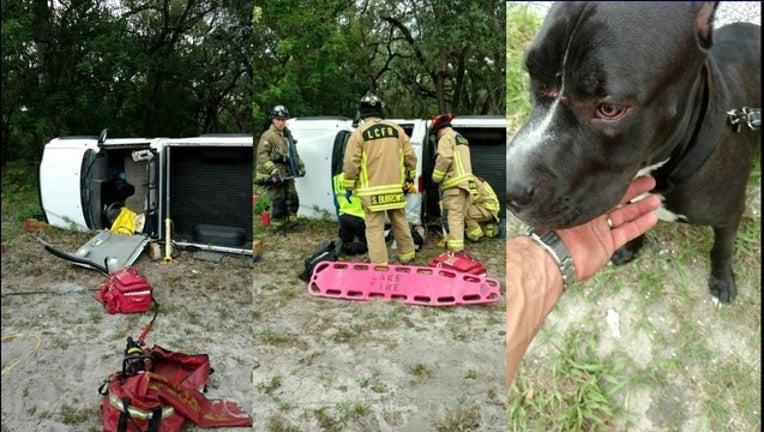 56ea2211-dog thrown from car_1495711988429.jpg