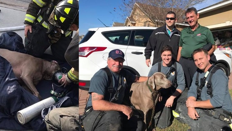 a03ca970-firefighters save dog_1547664930794.png.jpg