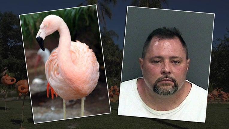 6fce5987-flamingo assault_1470259498438-401385.jpg