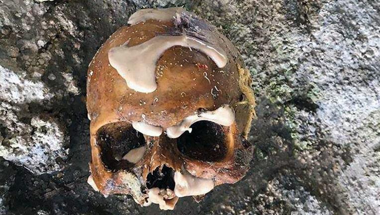a783515d-florida-keys-skull_1502145729588.jpg