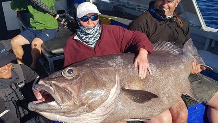 c3ff0738-giant fish credit Brendon Shinnick Reel Force Charters_1520977473381.jpg-401385.jpg