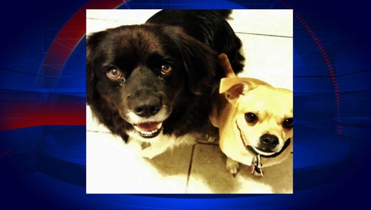 963f05c6-miniature-dogs-killed-by-pit-bulls_1480651378168.jpg