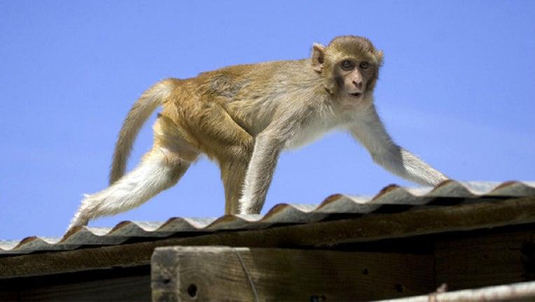monkey_1477578457839-401385.jpg