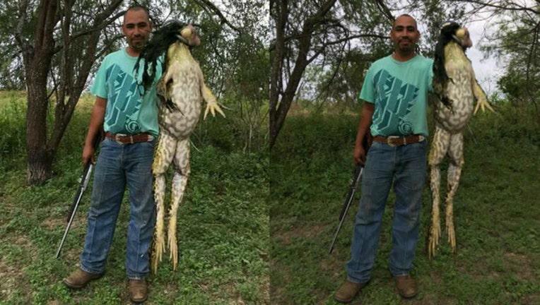 170aeb4e-monster bull frog_1496099167958-404023.jpg