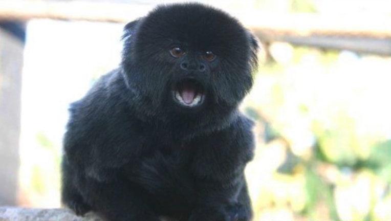 fd139b62-palm-beach-zoo-monkey-theft_1550019990604.jpg