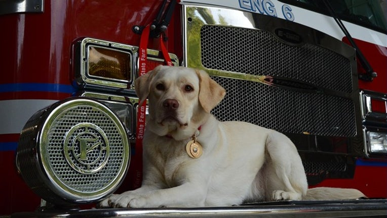 4f8e12d8-petco arson dog_1526920723393.png.jpg