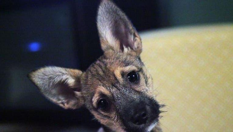 puppy-dog_1479666773288-404023.jpg