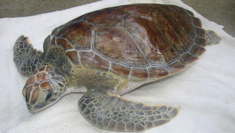110c1e3c-sea-turtle.jpg