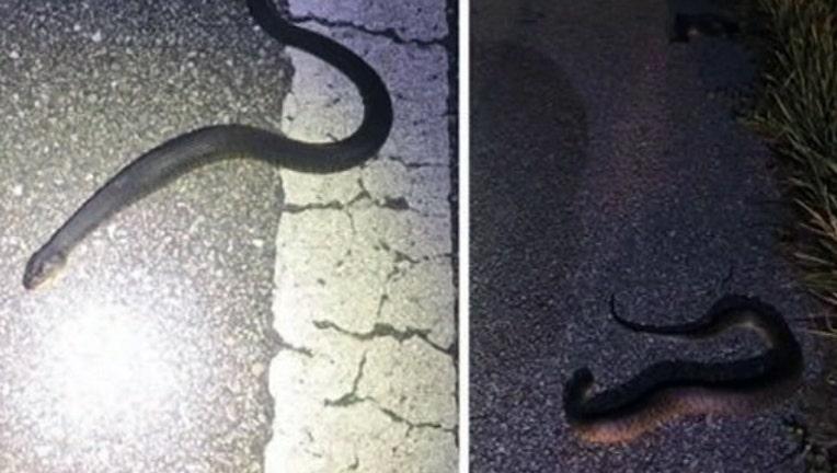 a6e62057-snakes-road-sarasota_1476327198217.jpg