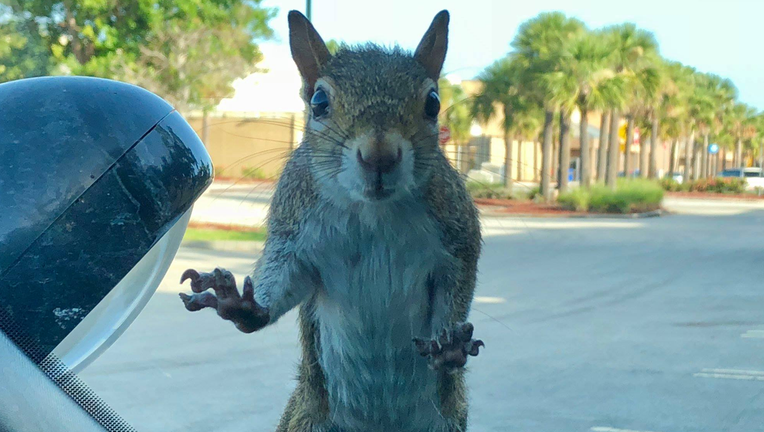 Man S Tiny Picnic Table For Squirrels Goes Viral Prompts People In Quarantine To Build Their