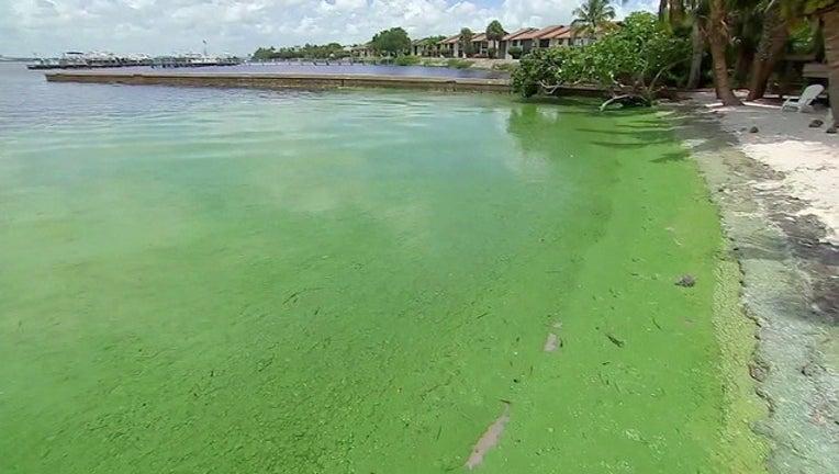 48dd838a-green algae WTVT-401385
