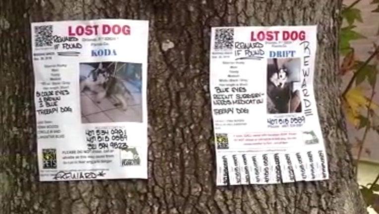 b44a0677-stolen service dogs_1546113801661.jpg.jpg