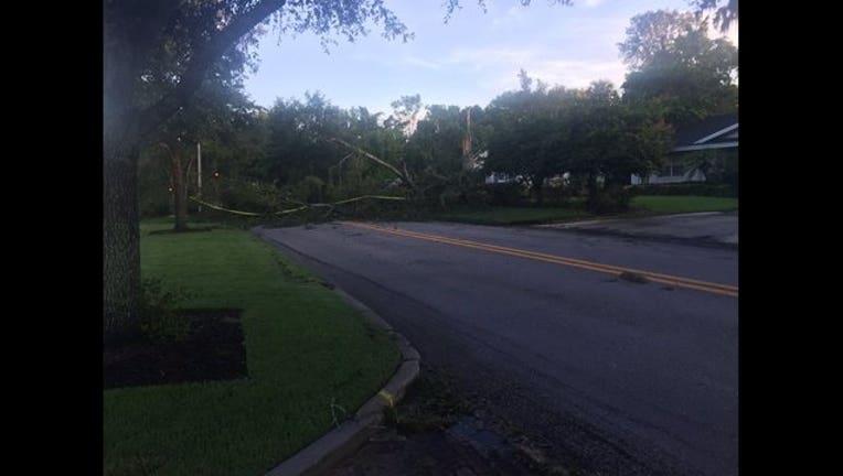 9cfcbfce-tree fallen storm damage_1499257158596.jpg