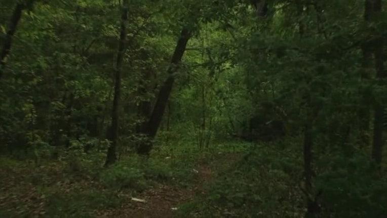 Woods -401096.jpg