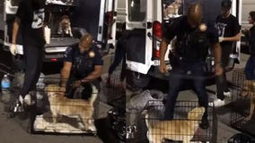 Oklahoma police officers help shelter volunteers walk 120 dogs: 'The help was very appreciated'