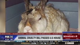 An act that will make animal cruelty a felony is closer to becoming law