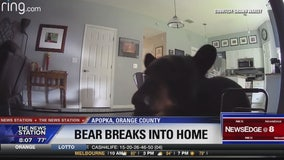 Man securing home after curious bear enters through sliding glass door