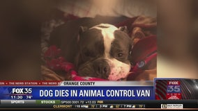 Dog dies while in Animal Control van