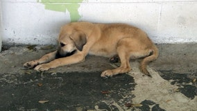 Bill aims to protect dogs during severe weather, hurricanes