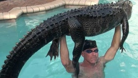 Florida man removes 'super mellow' 8-foot alligator from swimming pool