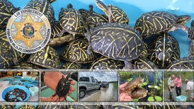 Two Florida men arrested for trafficking ring smuggling thousands of turtles