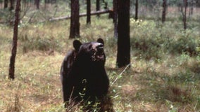 Florida House acts to stiffen penalties on bear poaching