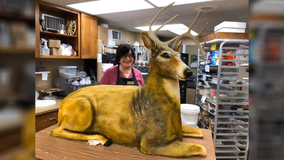 Bakery goes viral after posting photo of life-size deer cake