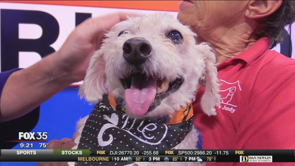Lucky is up for adoption at Pet Rescue by Judy