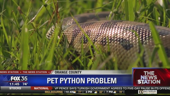 2 ball pythons found in Orlando area in as many days