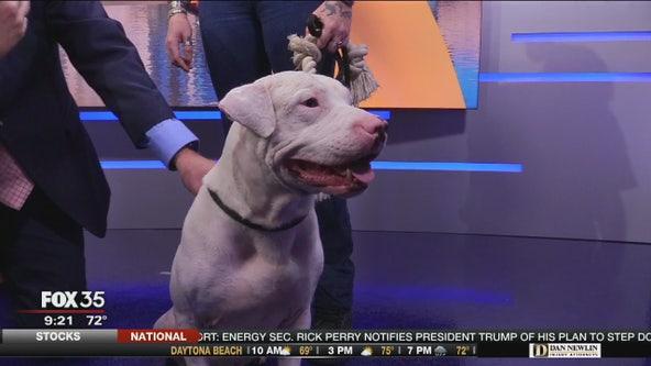 Adopt-a-pet (10/18/19)
