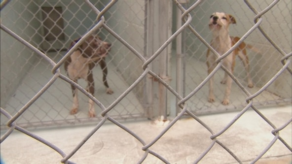 Senator seeks to protect dogs during bad weather