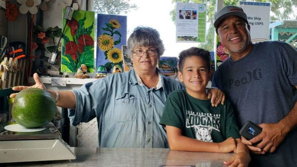 Hawaii family grows world's heaviest avocado at 5.6 pounds, makes 'a whole bunch of guacamole'