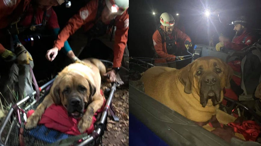 Massive 190-Pound Mastiff rescued from Utah canyon after getting stuck