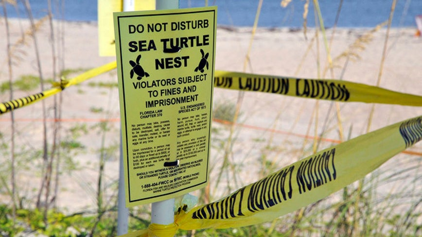Hotel project met with resistance from sea turtle group