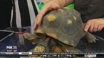 Wild Wednesday: Alberta the red-footed tortoise