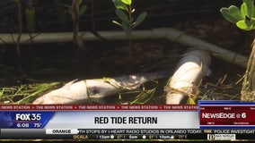 Red tide concerns are high in Southwest Florida