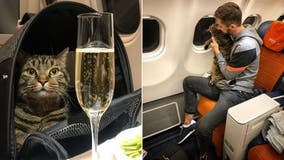 Man reportedly loses 400,000 airline miles for sneaking 'fat cat' onto flight