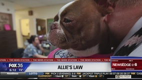 Allie's Law would mandate animal abuse reporting by veterinarians