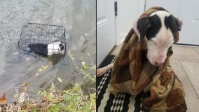 Man saves caged puppy found floating in freezing lake