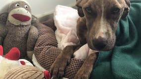 Dog found buried under rubble from Hurricane Dorian finally heads to forever home