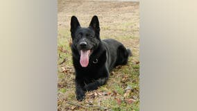 Police department mourns the death of their first K-9 officer
