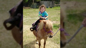 Florida woman says neighbor's dog killed pony